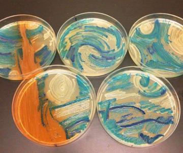 Creatii stiintifice: Arta cu microbi si bacterii