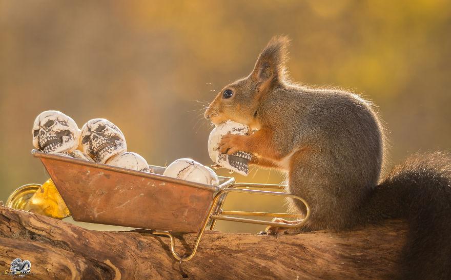 Frumoasa poveste cu veverite roscate, intr-un pictorial adorabil - Poza 15