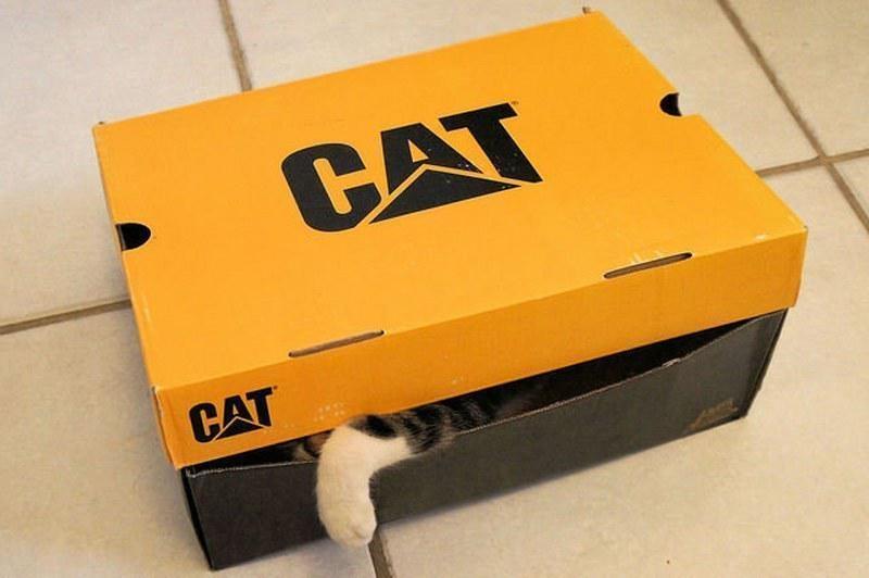Pisici poznase ascunse in fel de fel de locuri - Poza 7
