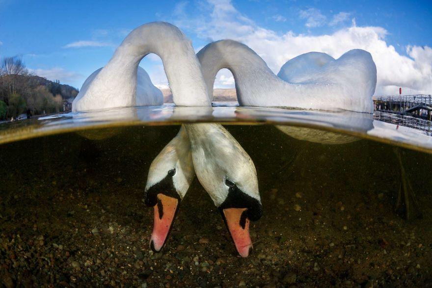 Fotografii superbe din uimitoarea lume subacvatica - Poza 6