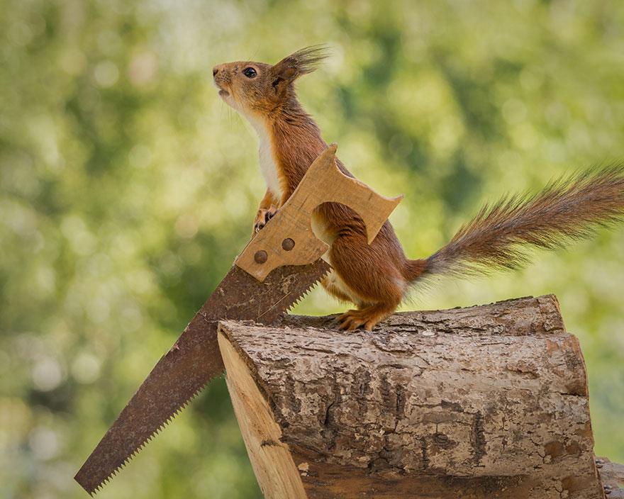 Frumoasa poveste cu veverite roscate, intr-un pictorial adorabil - Poza 7