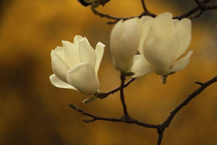 Splendoarea copacilor infloriti in poze superbe - Poza 4