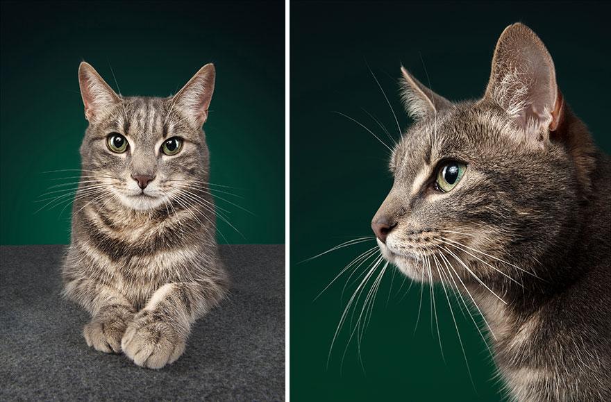 Cele mai frumoase pisici, intr-un pictorial atipic - Poza 2