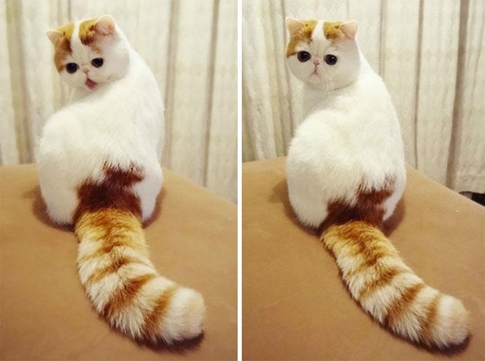 10+ Pisici superbe, in poze de colectie - Poza 9
