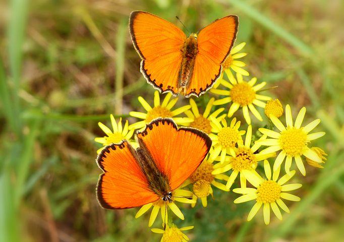 Cei mai frumosi fluturi din lume, in poze spectaculoase - Poza 23