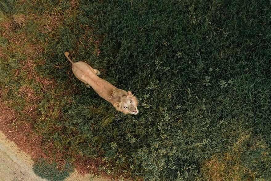 Cele mai frumoase fotografii facute cu drona - Poza 2
