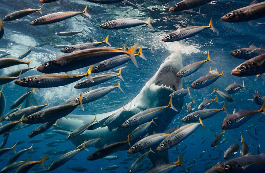 Concurs foto dedicat mediului: Splendoarea naturii, in poze uluitoare - Poza 17