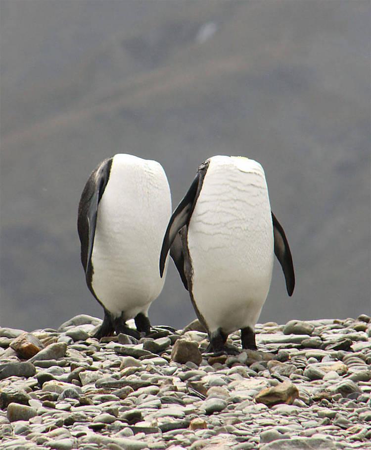 Premiile Comedy Wildlife: Poze amuzante cu animale salbatice - Poza 12