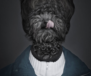 Caini la moda, de Sebastian Magnani