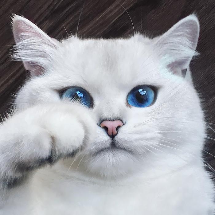 10+ Pisici superbe, in poze de colectie - Poza 4