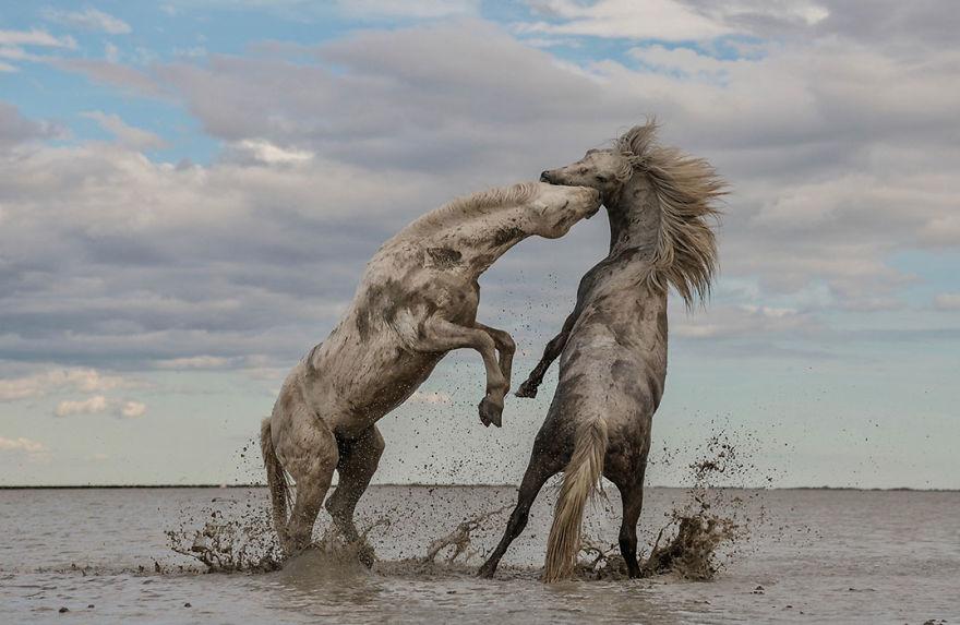 Concurs foto dedicat mediului: Splendoarea naturii, in poze uluitoare - Poza 2