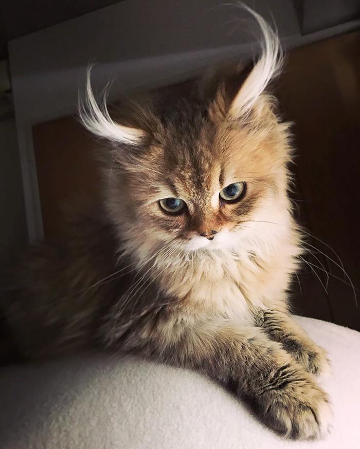 10+ Pisici superbe, in poze de colectie - Poza 5