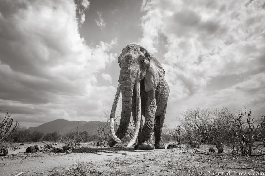 """Povestea ultimelor fotografii cu """"Regina elefantilor"""" - Poza 8"""