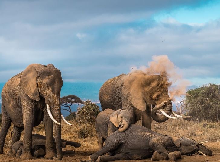 National Geographic: Cele mai bune poze ale anului 2018 - Poza 18