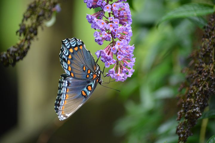 Cei mai frumosi fluturi din lume, in poze spectaculoase - Poza 2