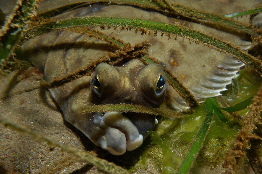 Fotografii superbe din uimitoarea lume subacvatica - Poza 26