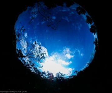 Cele mai bune fotografii subacvatice