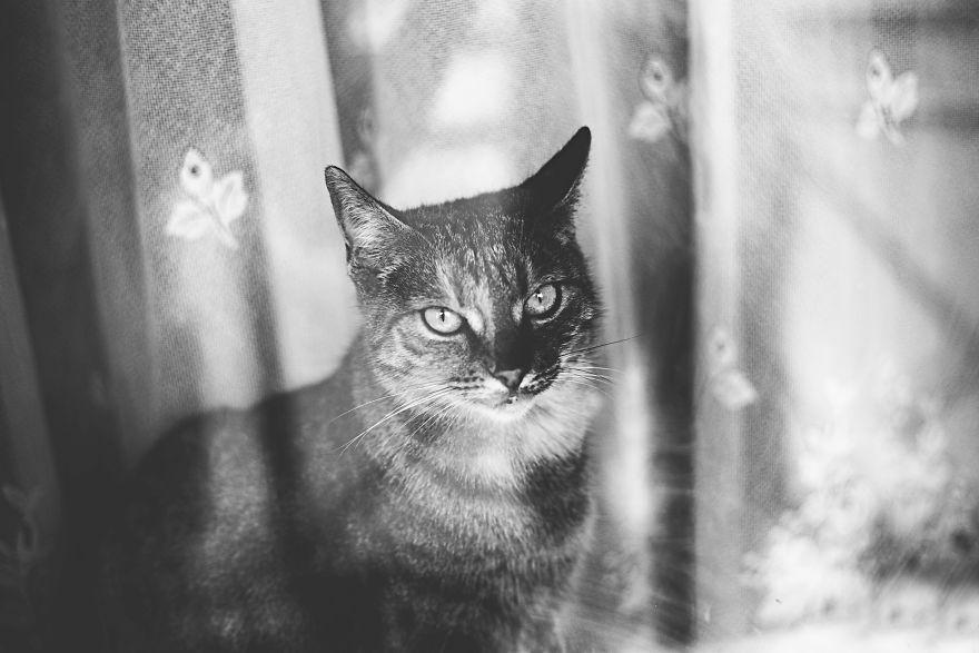 Pisici la fereastra, in poze alb-negru - Poza 10