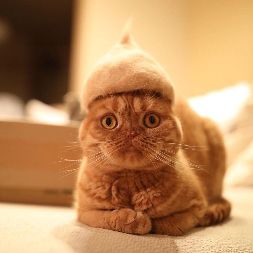 Cochete si haioase: Pisici cu palarii blanoase - Poza 6