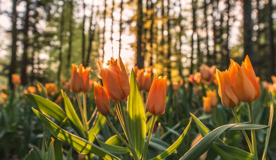 Cele mai frumoase flori din lume, intr-un pictorial de exceptie - Poza 1