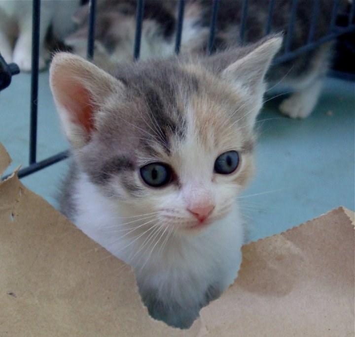 Cele mai dragute pisici din lume, in poze adorabile - Poza 7