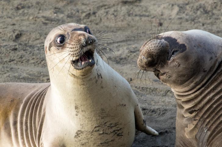 Cele mai expresive animale, in imagini haioase - Poza 18