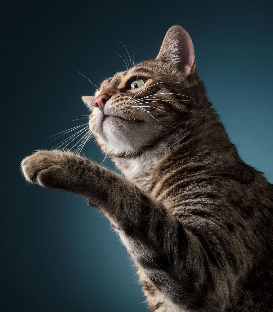 Cele mai frumoase pisici, intr-un pictorial atipic - Poza 8