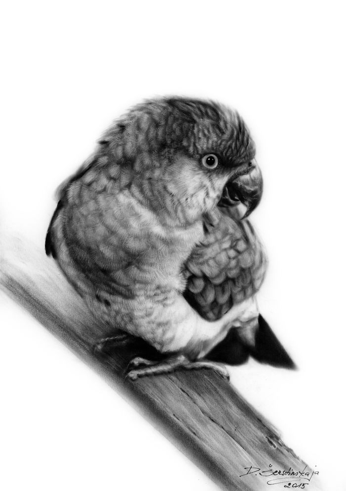 Arta realistica: Lumea animala, in picturi superbe - Poza 5