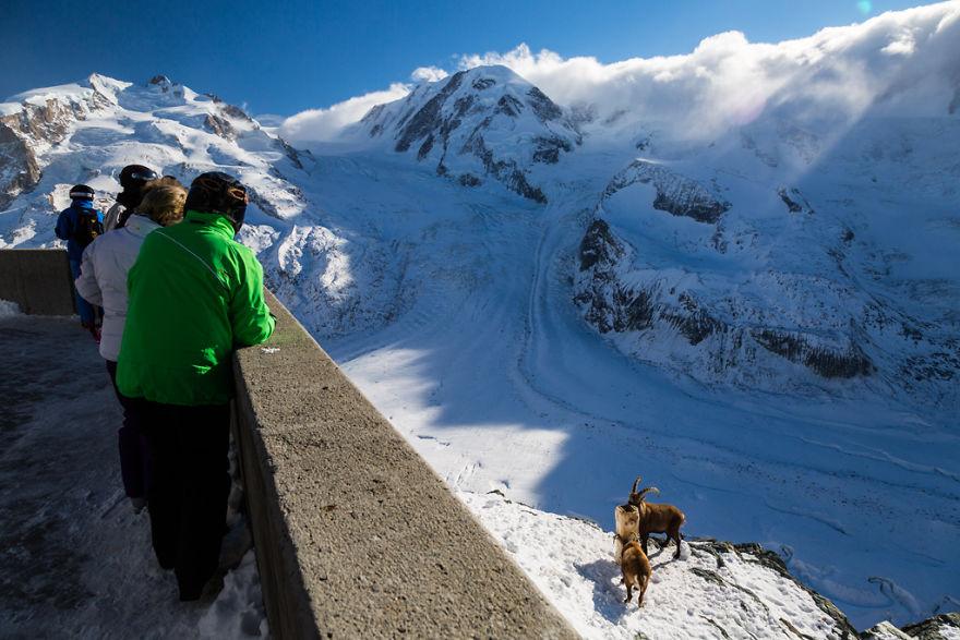 Maretia Alpilor pe timp de iarna - Poza 11