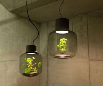 Lampa-ghiveci: Un ornament viu si luminos