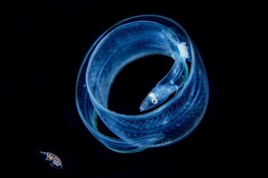 Fotografii superbe din uimitoarea lume subacvatica - Poza 12