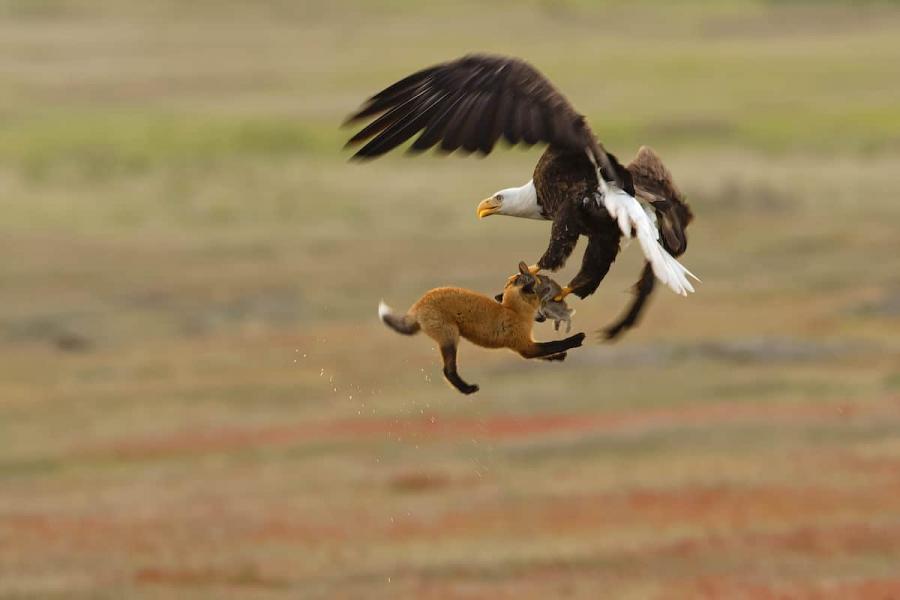 Audubon 2019: Splendoarea pasarilor, in cele mai frumoase fotografii - Poza 5