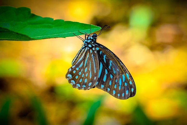 Cei mai frumosi fluturi din lume, in poze spectaculoase - Poza 16