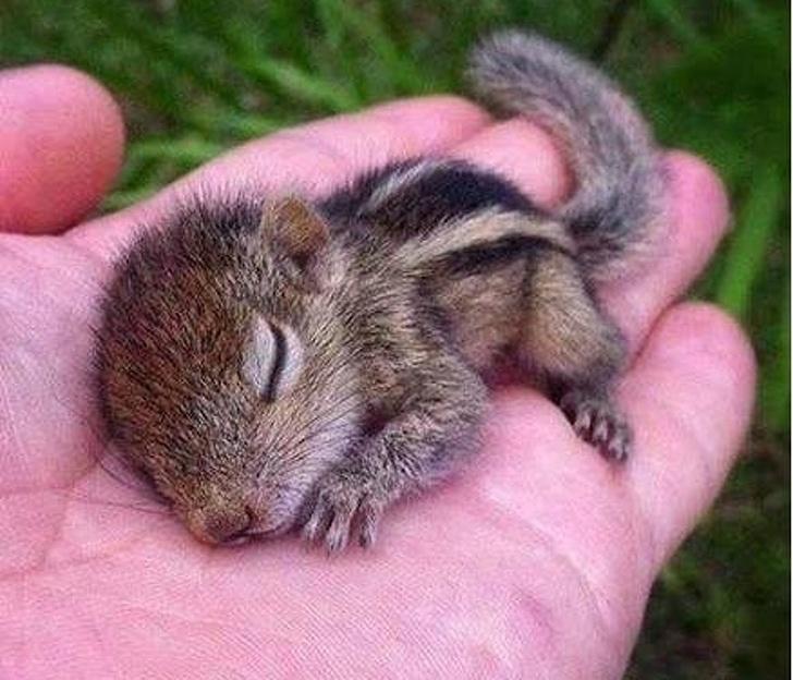 Cele mai simpatice animale lenese, in poze adorabile - Poza 10
