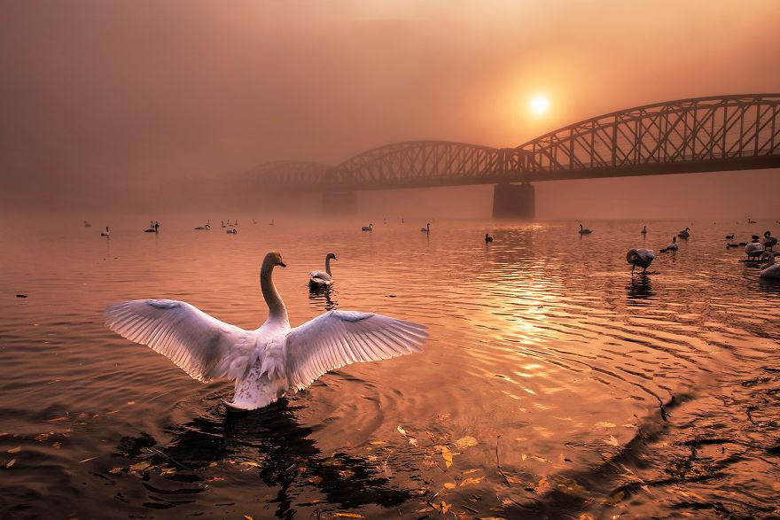 Cele mai bune fotografii cu si despre natura din 2019 - Poza 3
