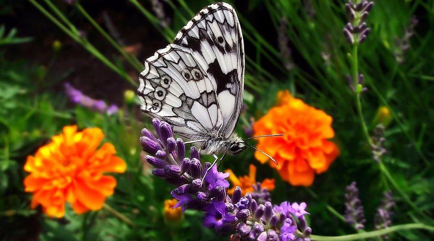 Cei mai frumosi fluturi din lume, in poze spectaculoase - Poza 15
