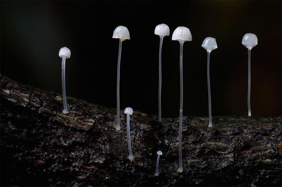10+ Ciuperci fantastice, in poze ireal de frumoase - Poza 8