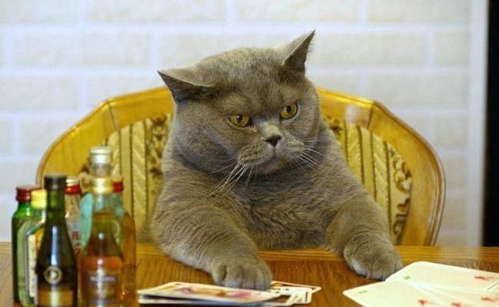 Pisicile chiar au simtul umorului. Avem dovada! - Poza 5