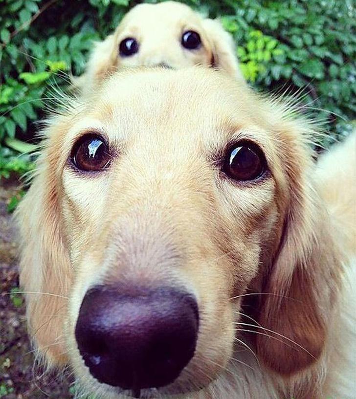 Cele mai prietenoase animale, in imagini induiosatoare - Poza 10