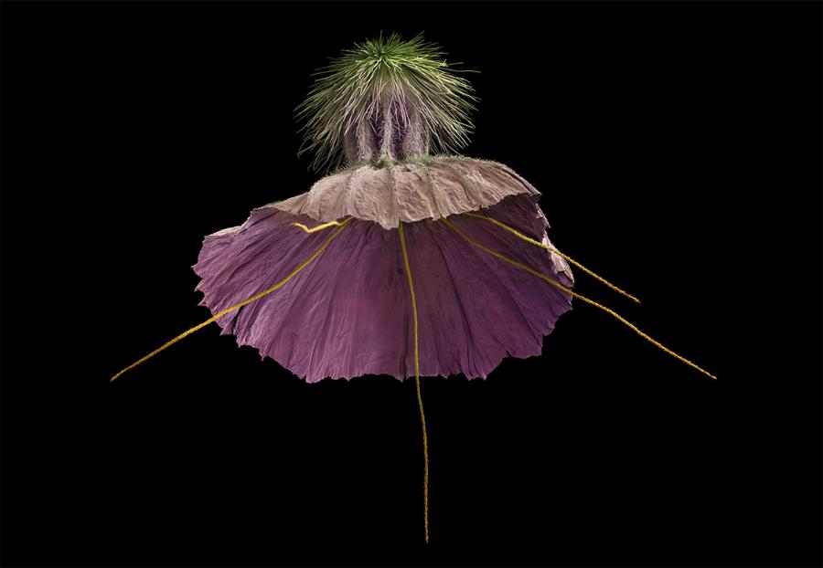 Intimitatea plantelor, in poze macro superbe - Poza 3