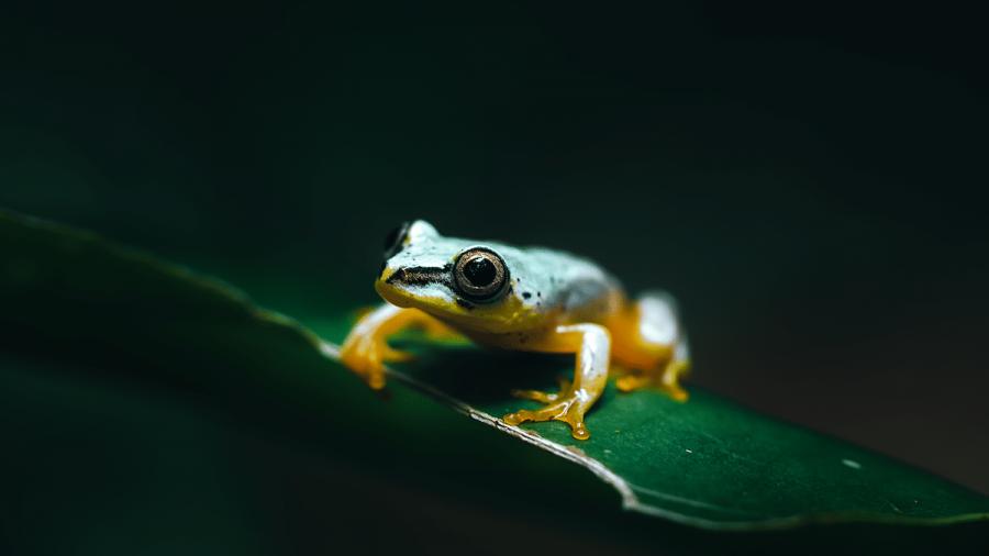 Frumusetea salbaticiei din Madagascar, in poze uluitoare - Poza 2
