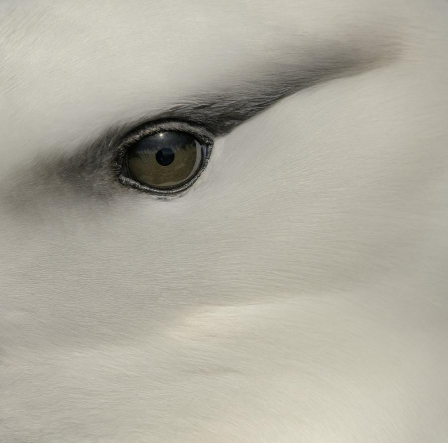 Audubon 2019: Splendoarea pasarilor, in cele mai frumoase fotografii - Poza 8