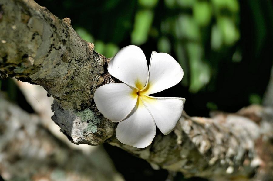 Cele mai frumoase flori din lume, intr-un pictorial de exceptie - Poza 9