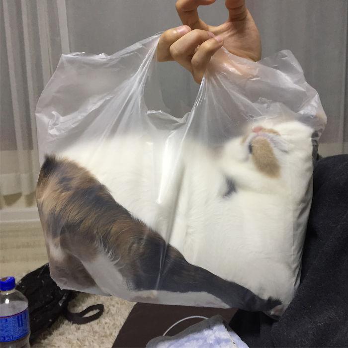 20+ Pisici contorsioniste, in poze haiose - Poza 19