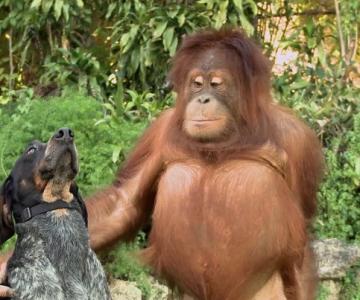 Cele mai prietenoase animale, in imagini induiosatoare