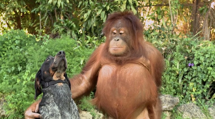 Cele mai prietenoase animale, in imagini induiosatoare - Poza 1