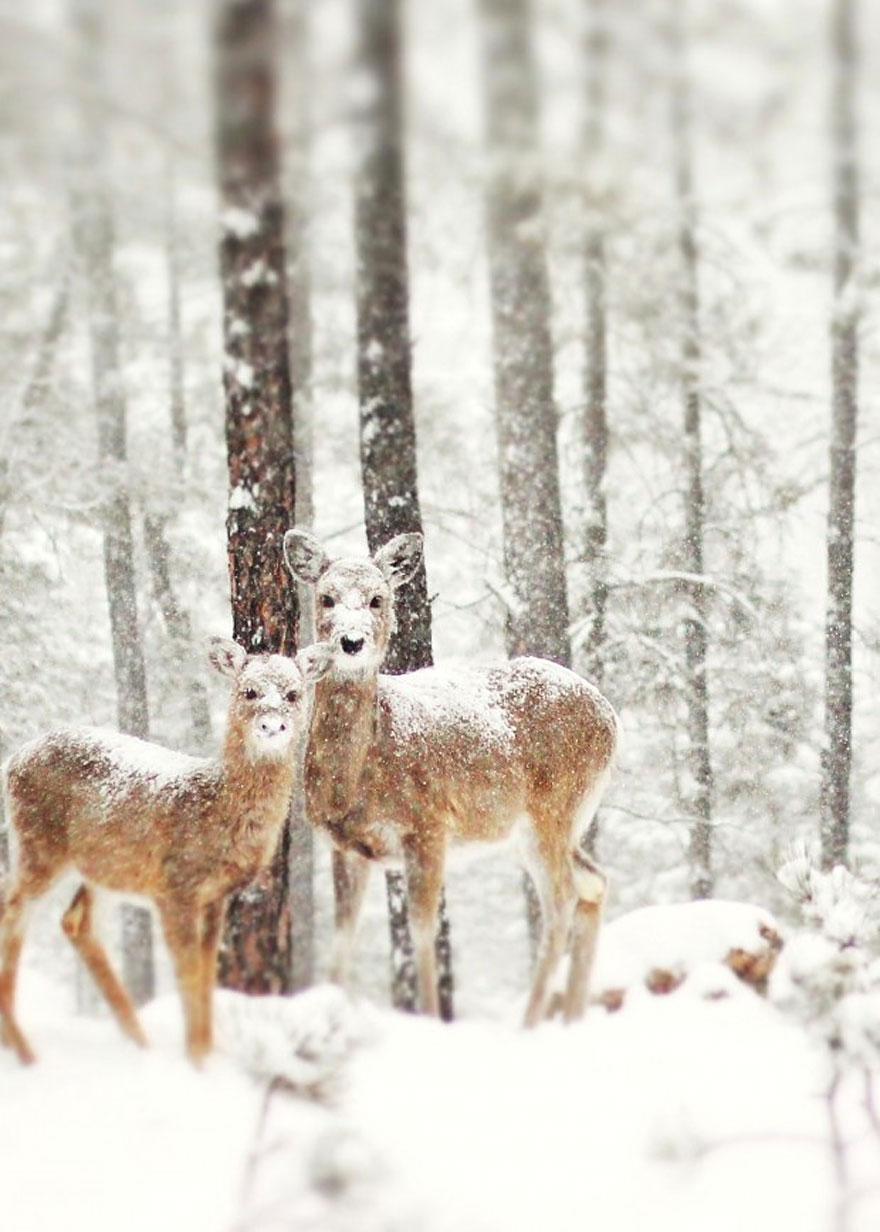 Cele mai frumoase peisaje de iarna - Poza 14