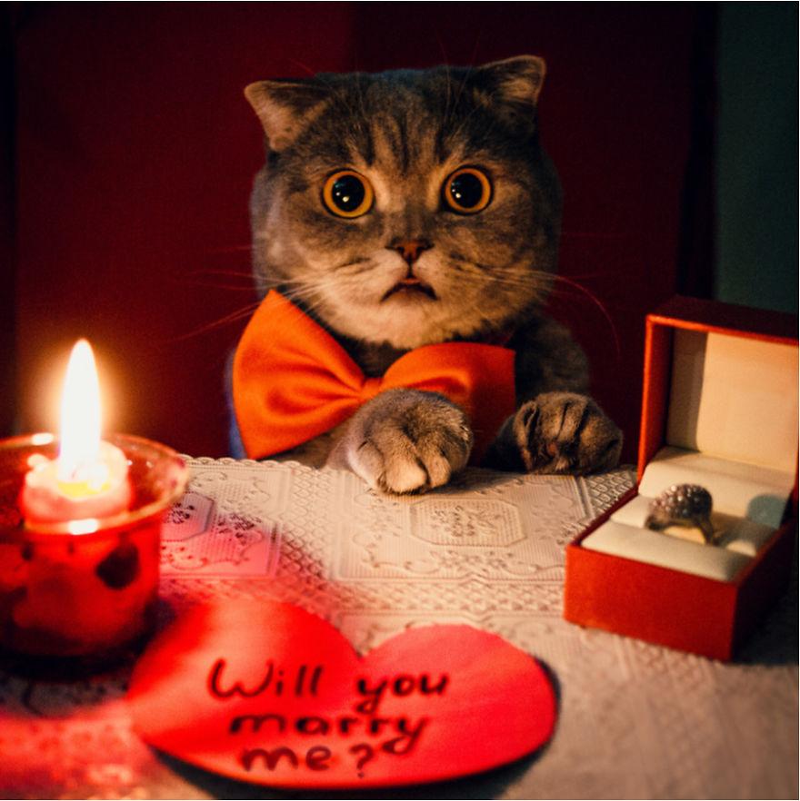 Cele mai frumoase poze cu pisici - Poza 11