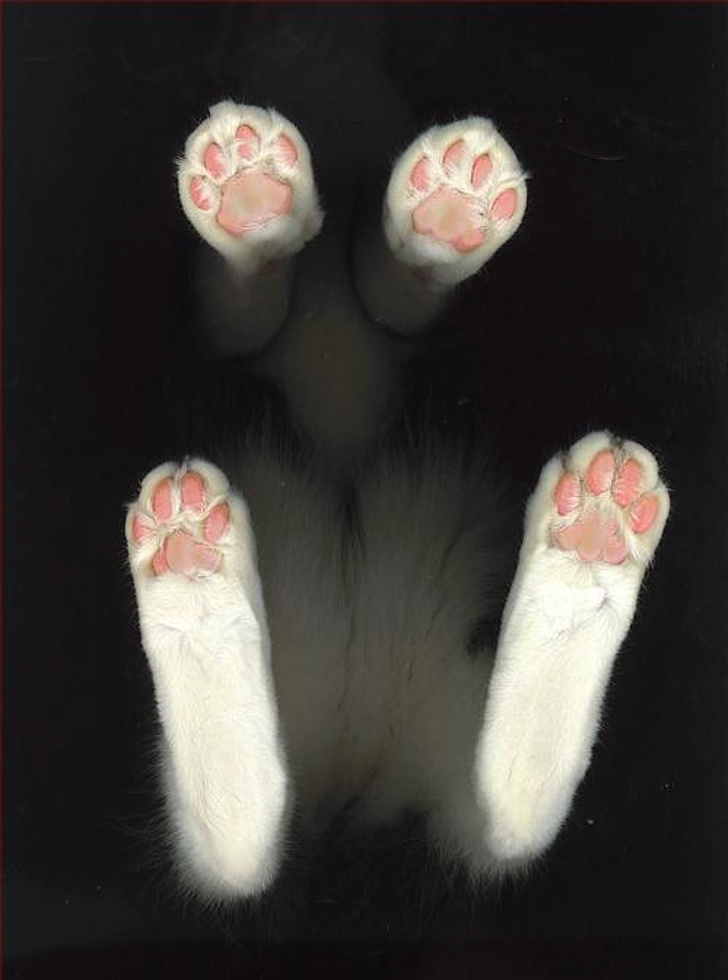 Dovezi ca pisicile sunt adorabile din orice unghi le-am privi - Poza 10
