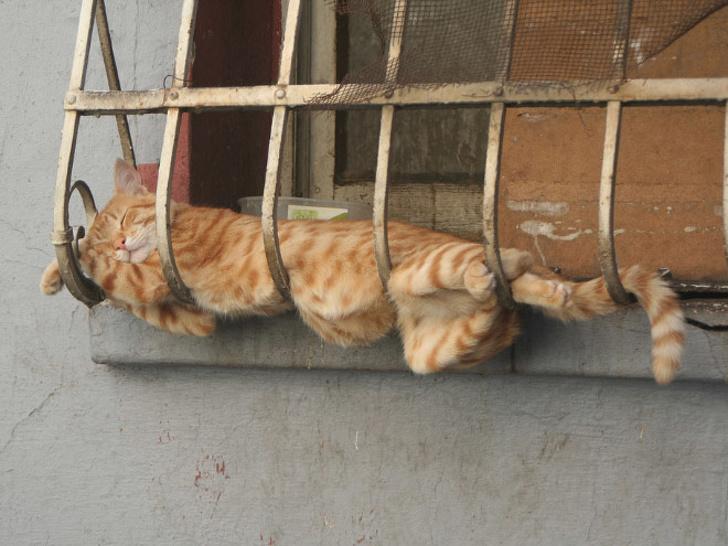 20+ Pisici adorabile si somnul lor nefiresc - Poza 9